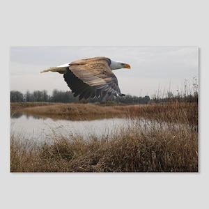 Soaring Eagle Postcards (Package of 8)
