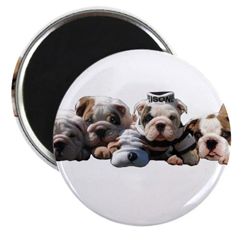 "BULLDOG SMILES 2.25"" Magnet (10 pack)"