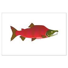 Sockeye Kokanee Salmon male f Posters