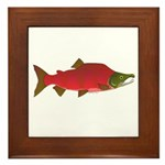 Sockeye Kokanee Salmon male f Framed Tile