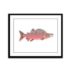 Pink Humpy Male salmon f Framed Panel Print