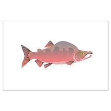 Pink Humpy Male salmon f Posters