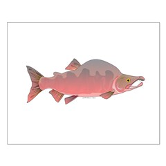 Pink Humpy Male salmon f Posters