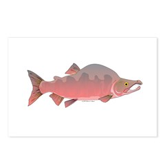 Pink Humpy Male salmon f Postcards (Package of 8)