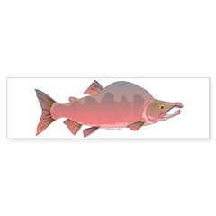 Pink Humpy Male salmon f Bumper Bumper Sticker