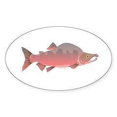 Pink Humpy Male salmon f Decal