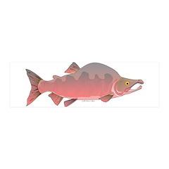 Pink Humpy Male salmon f Wall Decal