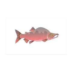 Pink Humpy Male salmon f Wall Decal