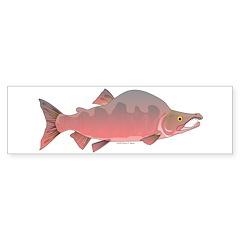 Pink Humpy Male salmon f Bumper Bumper Sticker