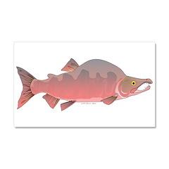 Pink Humpy Male salmon f Car Magnet 20 x 12
