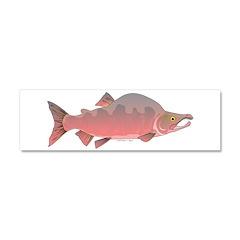 Pink Humpy Male salmon f Car Magnet 10 x 3