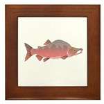 Pink Humpy Male salmon f Framed Tile