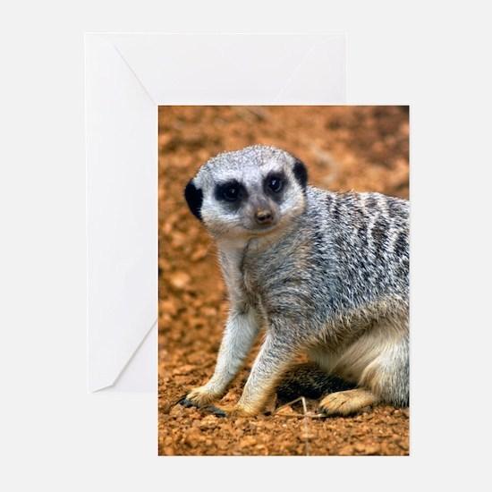Meerkat 4 Greeting Cards (Pk of 10)
