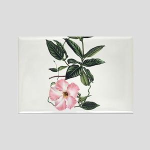 Vintage Pink Morning Glory Rectangle Magnet