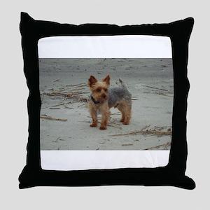 Yorkshire Terrier on the Beach at Hilton Head Thro