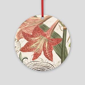 modern vintage winter garden amaryllis Ornament (R