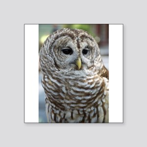 Barred Owl: Who are you??? Sticker
