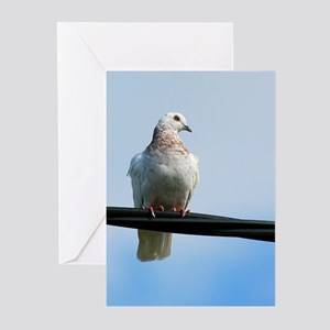 Pidgeon on a wire Greeting Cards (Pk of 10)