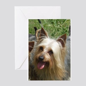 australian silky terrier Greeting Cards