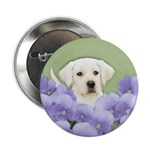 Labrador Retriever Puppy 2.25