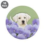 Labrador Retriever Puppy 3.5