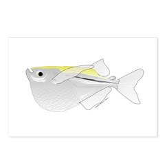 Silver Hatchetfish f Postcards (Package of 8)