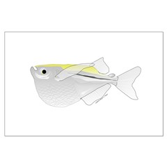 Silver Hatchetfish f Posters