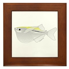 Silver Hatchetfish f Framed Tile