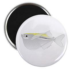 Silver Hatchetfish f 2.25