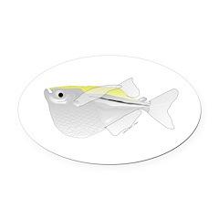 Silver Hatchetfish f Oval Car Magnet