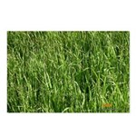 Grass Postcards (Package of 8)