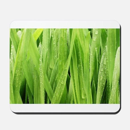 Close Up Grass After A Rainstorm Mousepad
