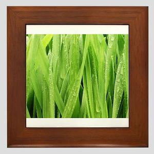 Close Up Grass After A Rainstorm Framed Tile