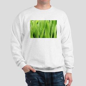 Close Up Grass After A Rainstorm Sweatshirt