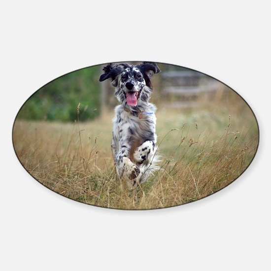 english setter in motion Decal