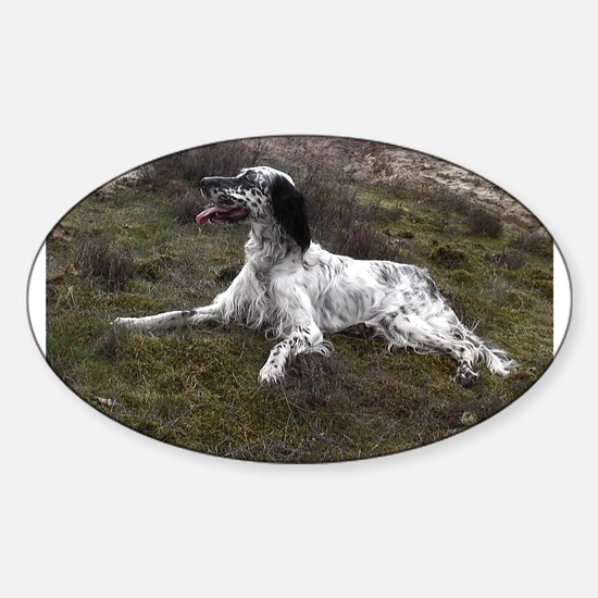 english setter laying Decal