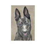 Dutch Shepherd Rectangle Magnet (10 pack)