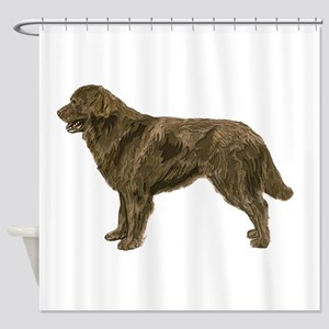 Brown Newfoundland dog Shower Curtain