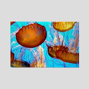 Monterey Aquarium. jellyfish madness Rectangle Magnet 29ebd4044