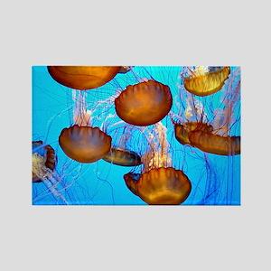 Jellyfish marmalade Rectangle Magnet