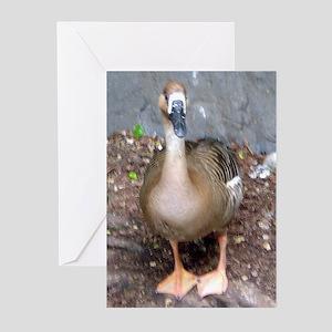 swan goose Greeting Cards (Pk of 10)