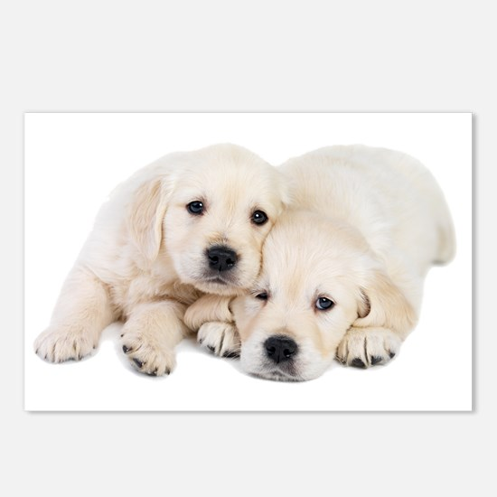 White Labradors Postcards (Package of 8)