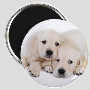 White Labradors Magnet