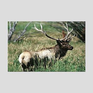 Elk Bull Mini Poster
