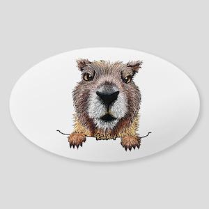 Yellow-bellied Marmot Sticker (Oval)