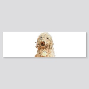 Labradoodle Ginger Bumper Sticker