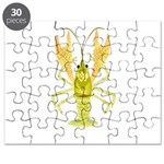 Ozark Spotted Crayfish Puzzle
