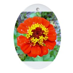 red flower Onondaga State Park Mo f Ornament (Oval