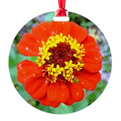 red flower Onondaga State Park Mo f Ornament