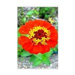red flower Onondaga State Park Mo f Posters